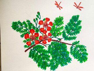 Vẽ hoa phượng